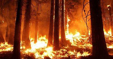 Мълния подпали гора край Виден