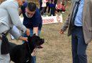 Над 180 кучета участват в киноложка изложба в Харманли