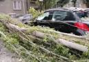 Клон от топола смачка Пежо пред полицията в Хасково